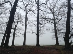 it is almost dream-like, the silence (apricots-and-coffee) Tags: fog trees treesinfog virginia woods forests