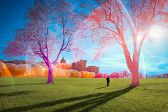 Living Color (jrseikaly) Tags: montral qubec canada ca multicolor color colorful a hybrid infrared park parc sky jack seikaly ir nature montreal gardens outdoor plant tree trees bright portrait photoshop person guy real reality merge