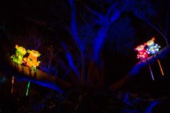 _MG_5333-HDR.jpg (Tibor Kovacs) Tags: lights festival tarongazoo vivid australia colors monkeys sydney night colours