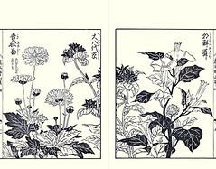 Japanese thimbleweed, bellflower and downy thorn-apple (Japanese Flower and Bird Art) Tags: flower thimbleweed anemone hupehensis ranunculaceae bellflower campanula campanulaceae downy thornapple datura metel solanaceae yasukuni tachibana kano woodblock picture book japan japanese art readercollection