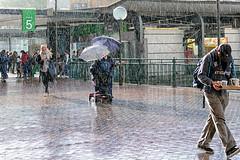 Rain (tonyg1494) Tags: raining streettogs rain streetphotography street sydney circularquay