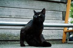 neko-neko1516 (kuro-gin) Tags: cat cats animal japan snap street straycat