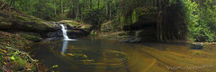 Buderim Forest Park, Martins Creek - QLD (Garry - www.visionandimagination.com) Tags: longexposure panorama green water leaves rain horizontal landscape waterfall rainforest australia queensland swirl sunshinecoast dreamscape buderim sunshinecoasthinterland