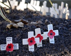 WE WILL REMEMBER THEM (simongavin83) Tags: war remember cross crosses poppy poppies tribute remembranceday remembrance prestwick veteransday armisticeday armistice remembering remembrancesunday 11thnovember nikond5100