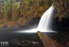 Upper Butte Creek Falls (Ian Sane) Tags: autumn trees fall nature water oregon creek forest river ian log long exposure butte images falls upper late brook wilderness sane