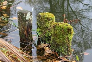 Autumnal pond still-life