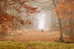 Autumn Forest (genf) Tags: autumn trees red orange mist green colors misty bomen mood photographer sony tripod herfst atmosphere bos sfeer fotograaf tmt statief a700 duingebied vogelenzang waterleiding hersfkleuren