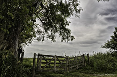 In between / En el medio (Claudio.Ar) Tags: trees sky santafe color tree green nature argentina clouds landscape topf50 nikon doors gray plains pampa tranqueras d7000 claudioar claudiomufarrege nikkor18105mmf3556gedafsvrdx