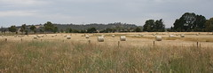 Rolled hay out of Hall (spelio) Tags: rotoballe hay bale straw summer harvest field paddock farming jay act 57views041113linked fave haystack good 291views090117 rural farm australia allover