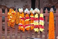 Durbar Square still lifes (10b travelling) Tags: charity nepal orange square asian necklace still earthquake asia blossom chain disaster kathmandu himalaya durbar marigold himalayas lifes himalayan 2010 catastrophe nepali southasia durbarsquare carstentenbrink