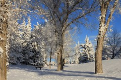 Winter wonderland (Una S) Tags: park blue winter sky white snow tree calgary pine sunny alberta wonderland