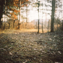 when there's a burning in your heart, build it bigger than the sun, let it grow, let it grow (wildorange55) Tags: sun bronze mediumformat golden goodness burnished mamiyac330 portra160 lateautumn