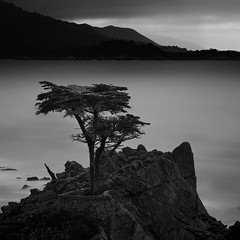 The Lone Cypress...... (M. Shaw) Tags: ocean california longexposure history beach nature water clouds canon monterey historic carmel bayarea ndfilter 2470mmf28l 10stopndfilter mshaw canoneos5dmarkll silverefexpro2