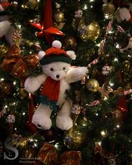 NY Festive Berry cute tree-7760 (Singing With Light) Tags: city nyc ny festive photography december pentax manhattan 2012 k5 jjp singingwithlight singingwithlightphotography 2012jjpk5nynycsingingwithlightcitydecemberfestivemanhattanpentaxphotographysingingwithlightphotography