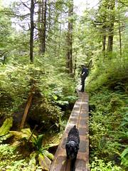 Tammy and Oreo (chartan) Tags: perseverancelake hiking trees nature water rocks ketchikan alaska boardwalk
