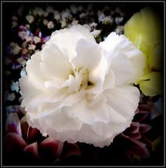 Natural Wonder (dimaruss34) Tags: newyork brooklyn dmitriyfomenko flower image