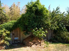 Root Cellar in the Summer (Heath & the B.L.T. boys) Tags: permaculture farm gogreen
