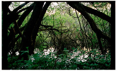 The Overgrown (Melanie Jayne Art) Tags: overgrown gardens lakes daylesford branches trees green meditative film photography 2011 serene mysterious