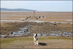 West Kirby Wirral  230816 (1) (over 4 million views thank you) Tags: westkirby wirral lizcallan lizcallanphotography sea seaside beach sand sandy boats water islands people ben bordercollie dog beaches reflections canoes rocks causeway yachts outside landscape seascape