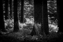 (Px4u by Team Cu29) Tags: wald licht lichtung gras gegenlicht waldboden baum fichte farn brombeer natur sommer warm ausruhen moos weich erholen