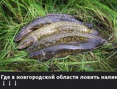 Где в новгородской области ловить налима? (ГоcРыбнадзоp) Tags: windows boats the4elements trail pool paysage nikon shadows