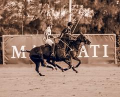 20160814194838 (Federico Alberto) Tags: santamarapoloclub polosotogrande sotograndepolo es espagne espaa polo sotogrand spain olympus omd em1 panasonicleicadgvarioelmar100400mmf463asph horses caballos chevaux cdiz andalusia dubaipoloteam goldcup nophotoshop nohdr