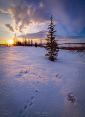 North, may (czdistagon.com) Tags: spring landscape north snow may birch dawn nature shadows czdistagoncom distagon matveevaleksandr czdistagon aleksandrmatveev distagont2815