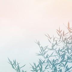 Naturaleza (argi) Tags: naturaleza natural planta verde fondo minimal minimalismo campo