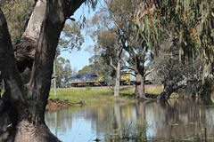 Native Habitat (james.sanders2) Tags: namoi cotton central west new south wales nsw railways diesel locomotive trangie main western line cf loco cf4402 cf4408 freightliner chicago freight car leasing floodwater 8182n