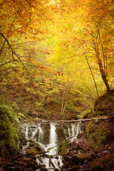 Tears of the earth (RKAMARI) Tags: yedigllernationalpark autumn contemplative daylight forest frame landscape miksang nature outdoor reflections travel trees water waterfall flickrsbest