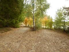 Glimpse towards Lvnsbadet's nude beach at the lake Yngern (Flicker Classic Person) Tags: yngern lvnsbadet beach strand naturist nudist fkk sdertlje nykvarn sweden sverige safe 2016 trees textile