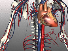 Blood vessels, circulation and thrombosis (familyherbalhealth) Tags: blood bloodvessels circulation health recipes thrombosis
