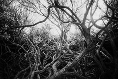 Longshaw Estate 24/09/2016 (Matthew Dartford) Tags: bokeh branch forest mess peakdistrict peaks tangled tree twisted wood woodland infrared photography ir woods