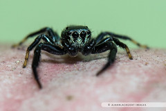 20121026-128 (ajakblackgoat) Tags: macro insect nikonmicro105mmf28 nikond700