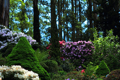 Rhododendron Gardens on a lovely spring day