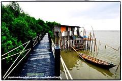 Mangrove forest Chonburi tour by naturenote_E12461014-015