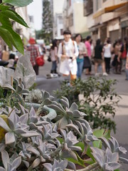 2012 (slowpoke_taiwan) Tags: city market taiwan 2012     taichungcity 2012  20121011