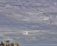Florida (joan_schiller) Tags: ocean christmas blue sky seagulls house storm building beach water birds yellow clouds bath cloudy gulls formation v tub bathtub billowy vformation billowyclouds