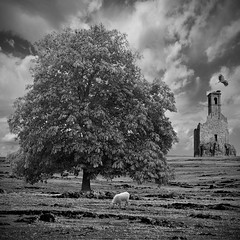 Deserted 7 (Eve Livesey) Tags: sky bw tree clouds daisies landscape sheep nest bn belltower montage land lone chestnut imaginary stork sognidreams