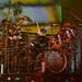 Rush San Diego November 21 2012-8