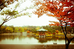 Serene (Huey Yoong) Tags: city autumn trees urban lake fall leaves garden leaf landscaping branches capital korea foliage seoul reflectionlake southkorea naturephotography travelphotography ichon outdoorgarden nationalmuseumofkorea