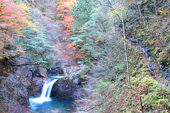 IMG_9734 (youkaine) Tags: november autumn red orange mountain yellow japan forest river waterfall hiking autumncolors foliage 日本 紅葉 秋 山 yamanashi 11月 川 ハイキング 山梨 nishizawakeikoku 葉っぱ 山梨県