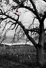 XXVI // The last apple. (Meli.M.) Tags: autumn red bw black tree apple nature last one nikon wine withe mm blackwithe thelastone thüngersheim nikkor18105mm nikond5100