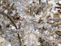 Ice Covered Rose Bush (RonG58) Tags: pictures new trip travel light plants usa plant color fall film ice nature rose geotagged botanical photography frozen us photo raw day image photos live wayne maine picture images photograph digitalcamera rosebush fugifilm topshots icecovered finepixhs20exr dailynaturetnc12 flickkrsportal rong58
