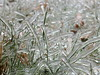 Ice Covered Grass (RonG58) Tags: pictures new trip travel light plants usa plant color fall film ice nature grass geotagged botanical photography frozen us photo raw day image photos live wayne lawn maine picture images photograph digitalcamera waynemaine fugifilm topshots icecovered finepixhs20exr dailynaturetnc12 flickkrsportal rong58