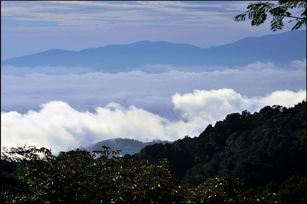 Misty mountain, Doi Tung, Chiang Rai, Thailand