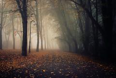 distance (ewitsoe) Tags: park street trees mist fall colors leaves fog 35mm nikon europe foggy poland shroud heavy poznan d80