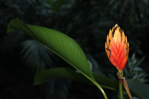 Duplooys Botanical Garden, Belize - 17