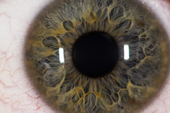 Simon's Eye (nils.rohwer) Tags: macro eye closeup nikon micro 105mm d600 su800