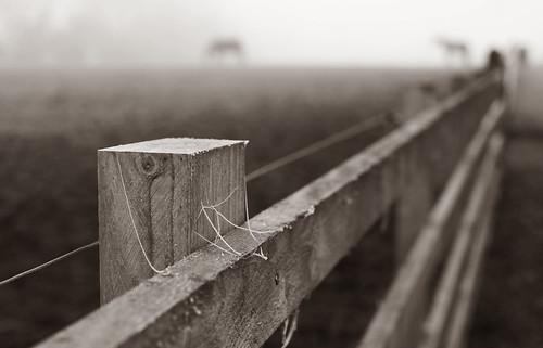 Horsekeh (orbed) horse fence minolta a99